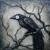 BLACKxBIRD's picture
